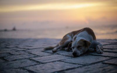 Richtiger Umgang mit Wachhunden auf Reisen: Unsere Lösung