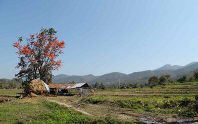 Reisen nach Pai, Thailand – Backpackertraum für Abenteurer
